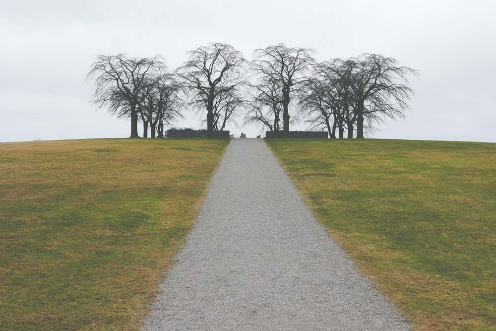 bare trees surrounded by green grass field