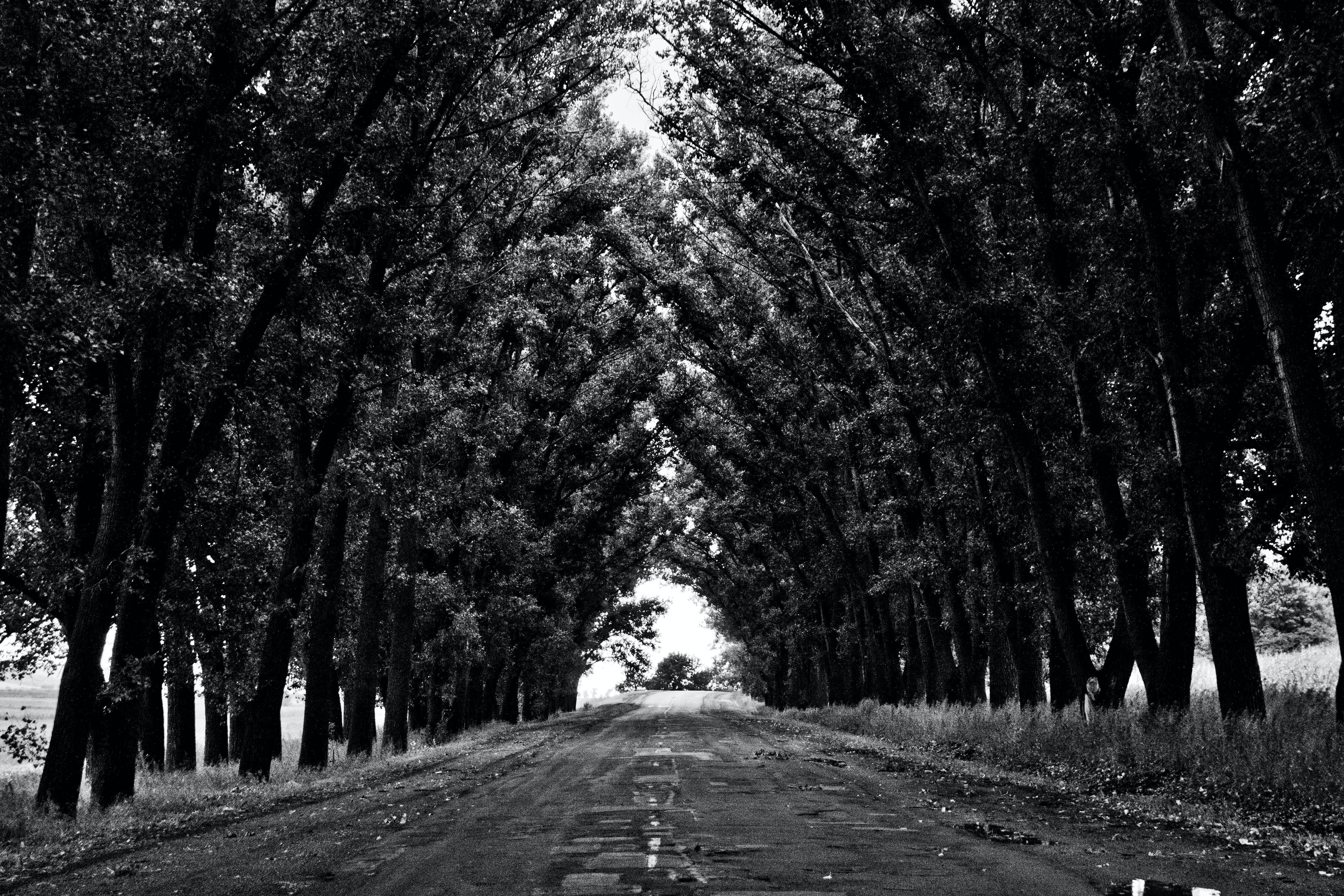 Black and white shot of worn down road with symmetrical tree archway