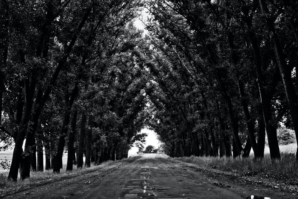 grayscale photo of leaf trees at daytime