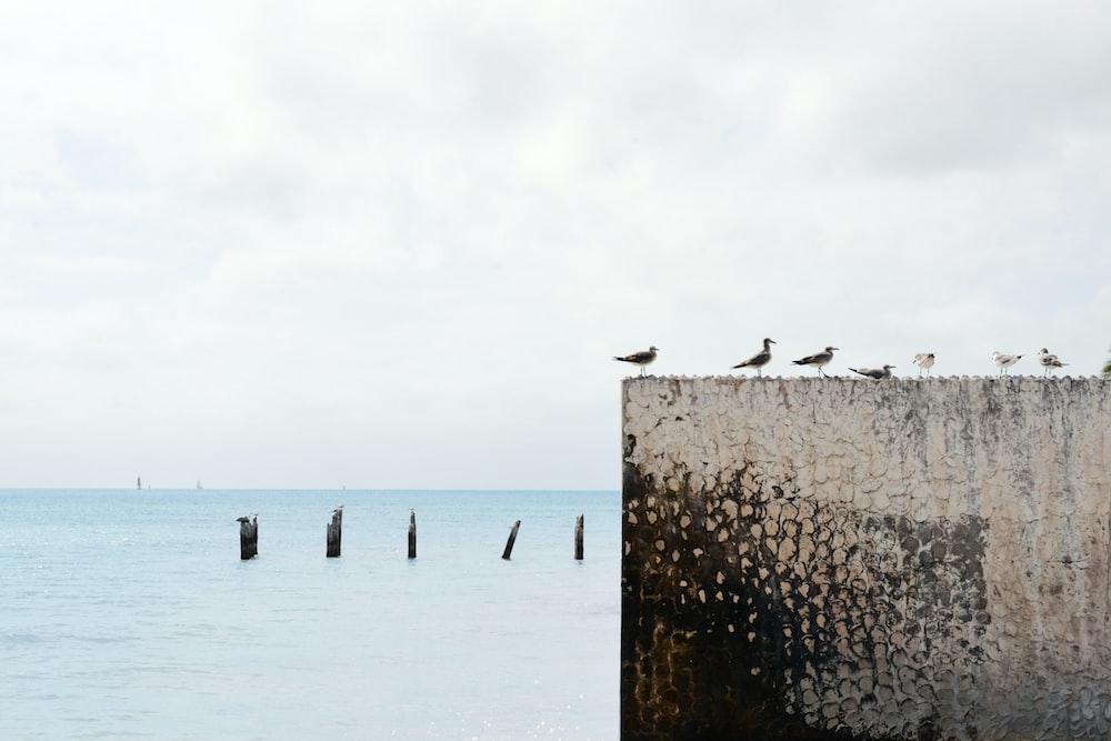 birds on wall near body of water