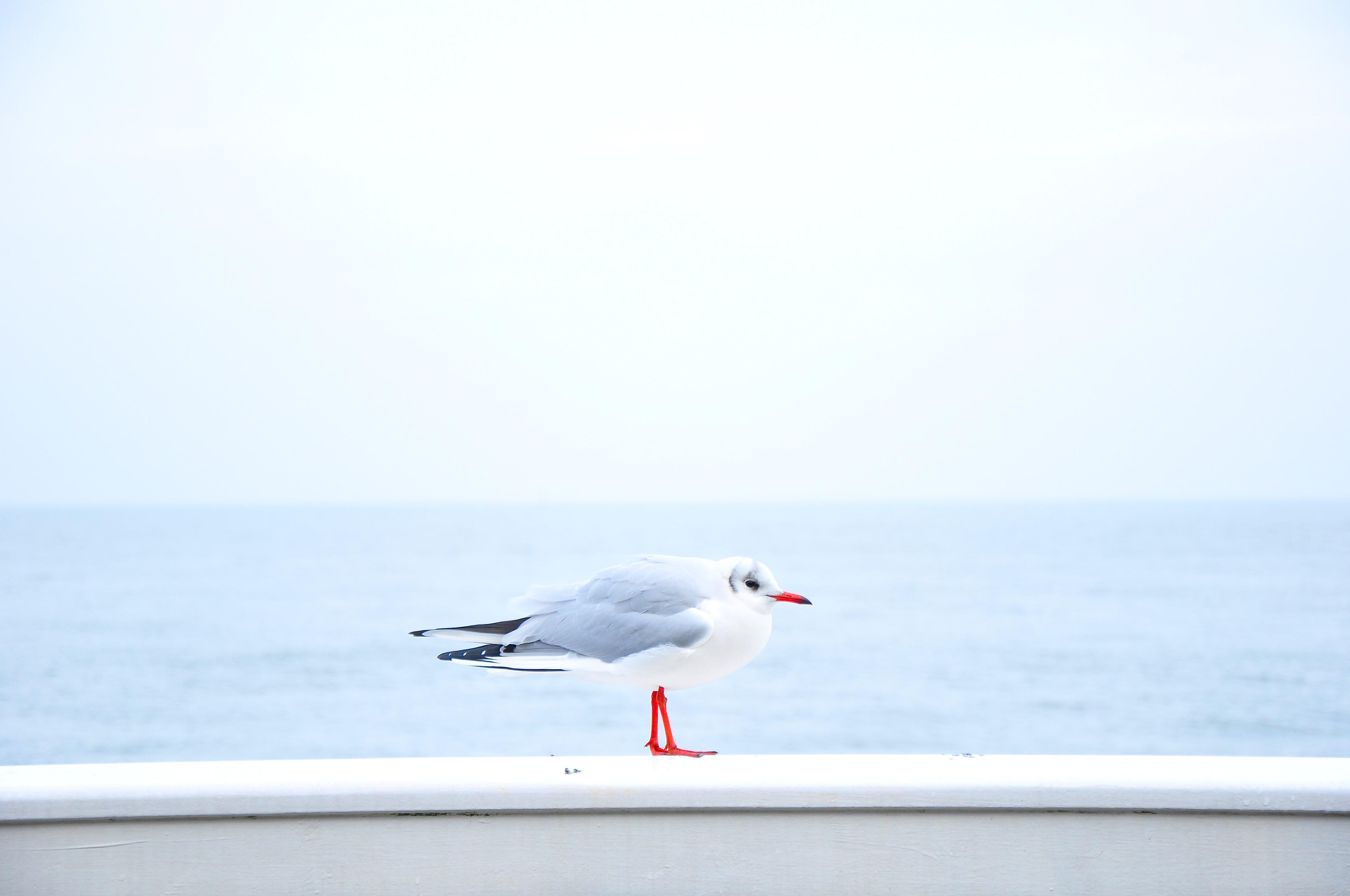 gray and white bird near body of water