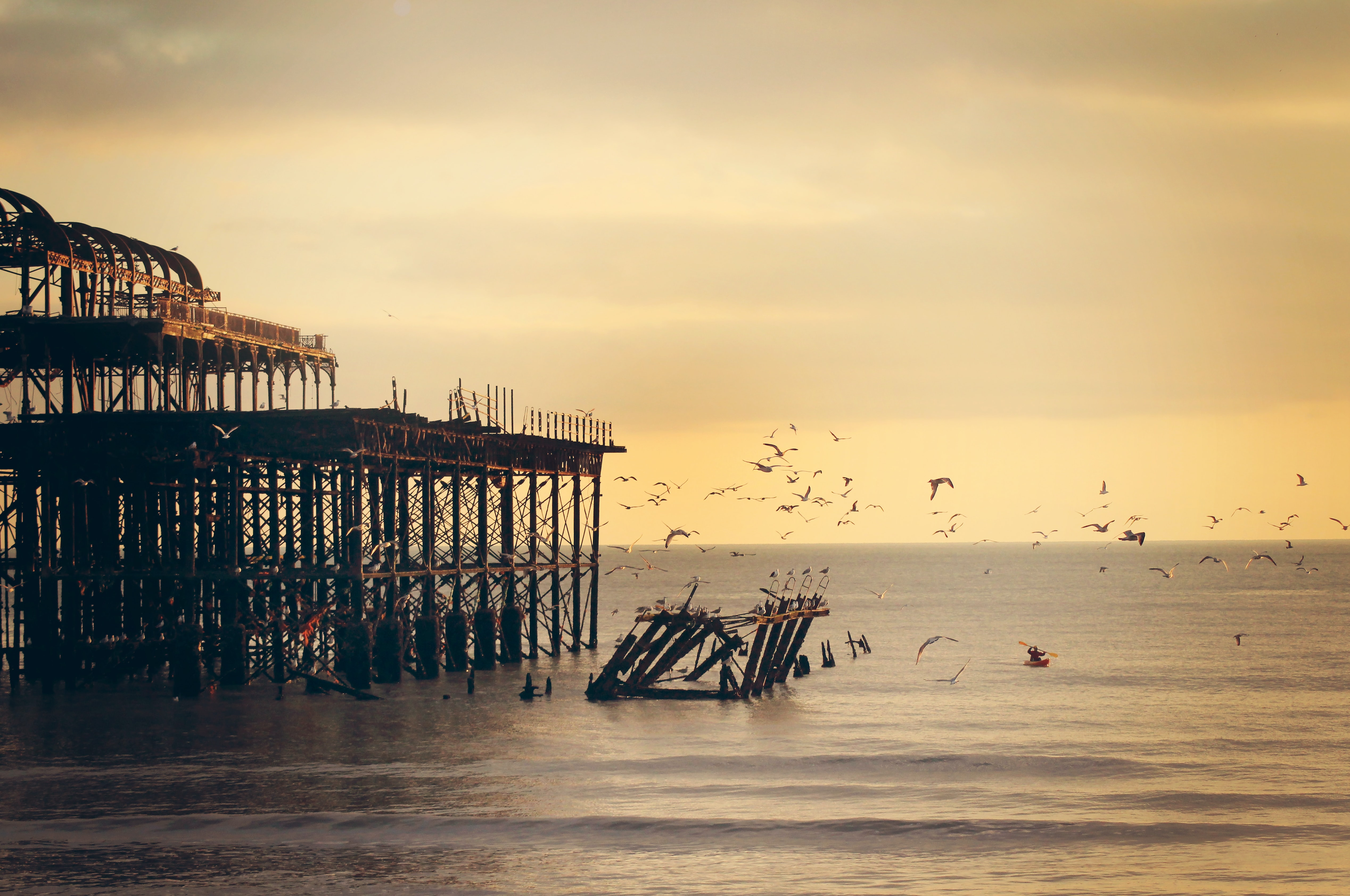 An evening shot with a golden sunset showing a group of seagulls flying around West Pier in Brighton