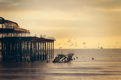 Seagulls at West Pier