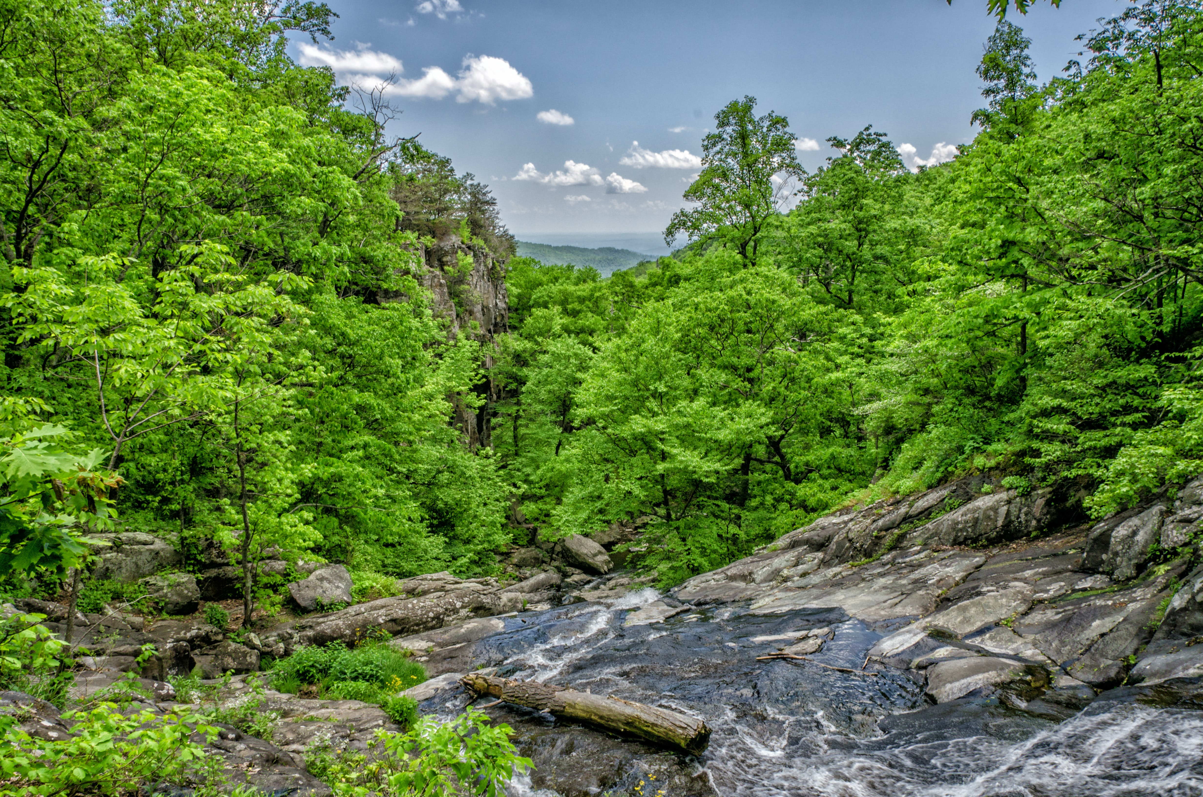 A brook tumbling down a rocky bed in a lush forest environment