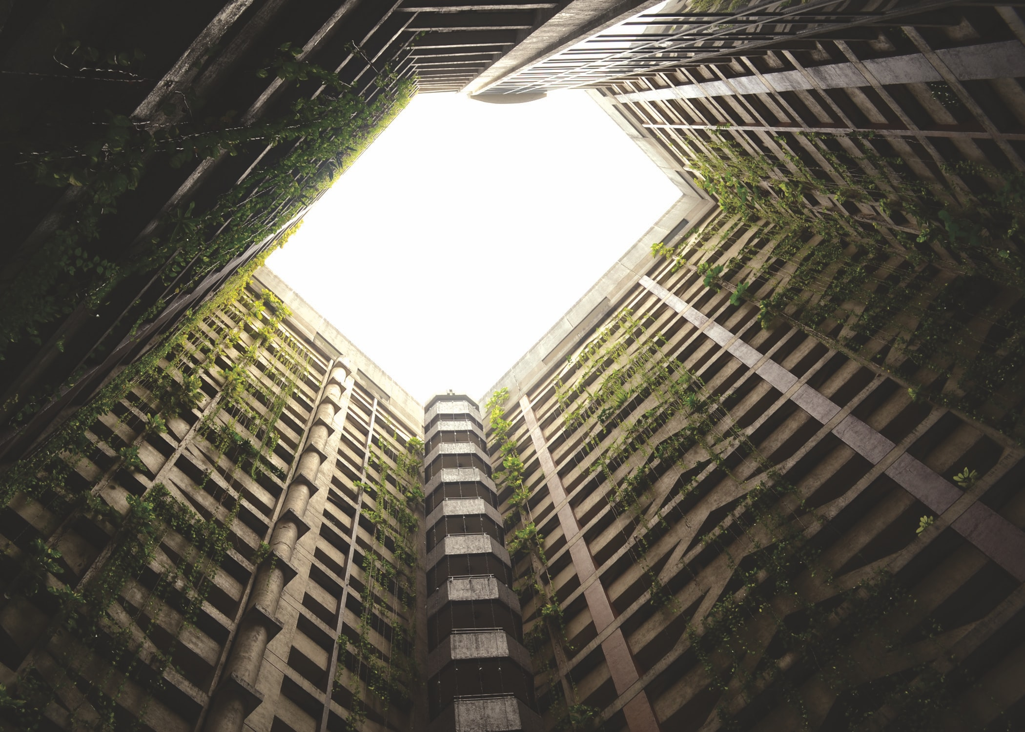 An abandoned building with overgrown vines