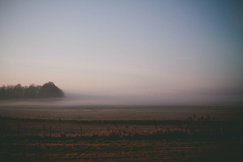 fog covered field