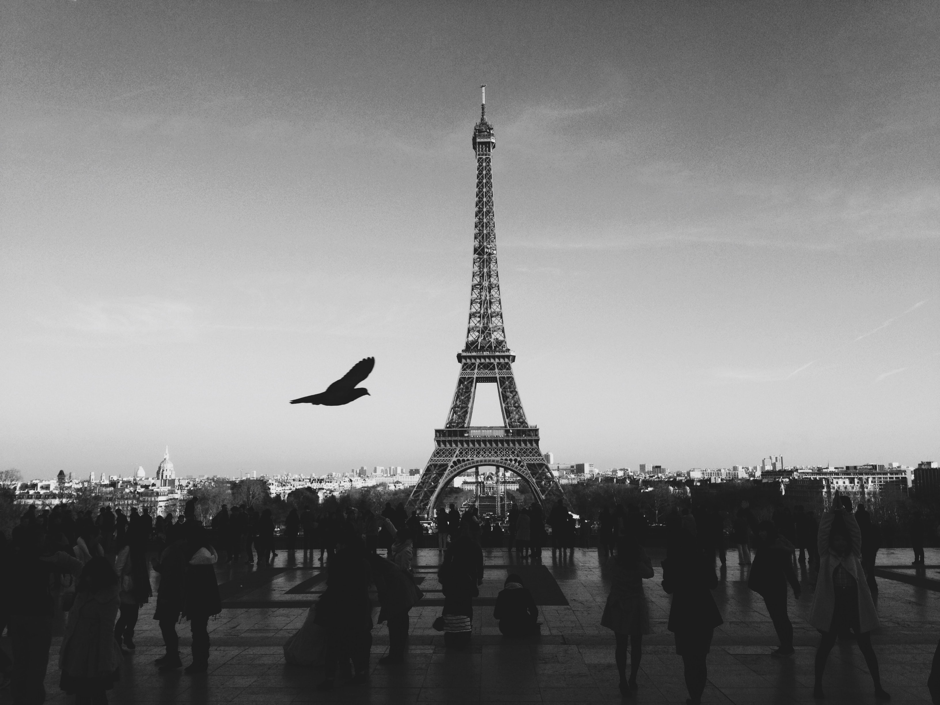 A black and white shot of the Eiffel Tower from Trocadéro with a bird flying across
