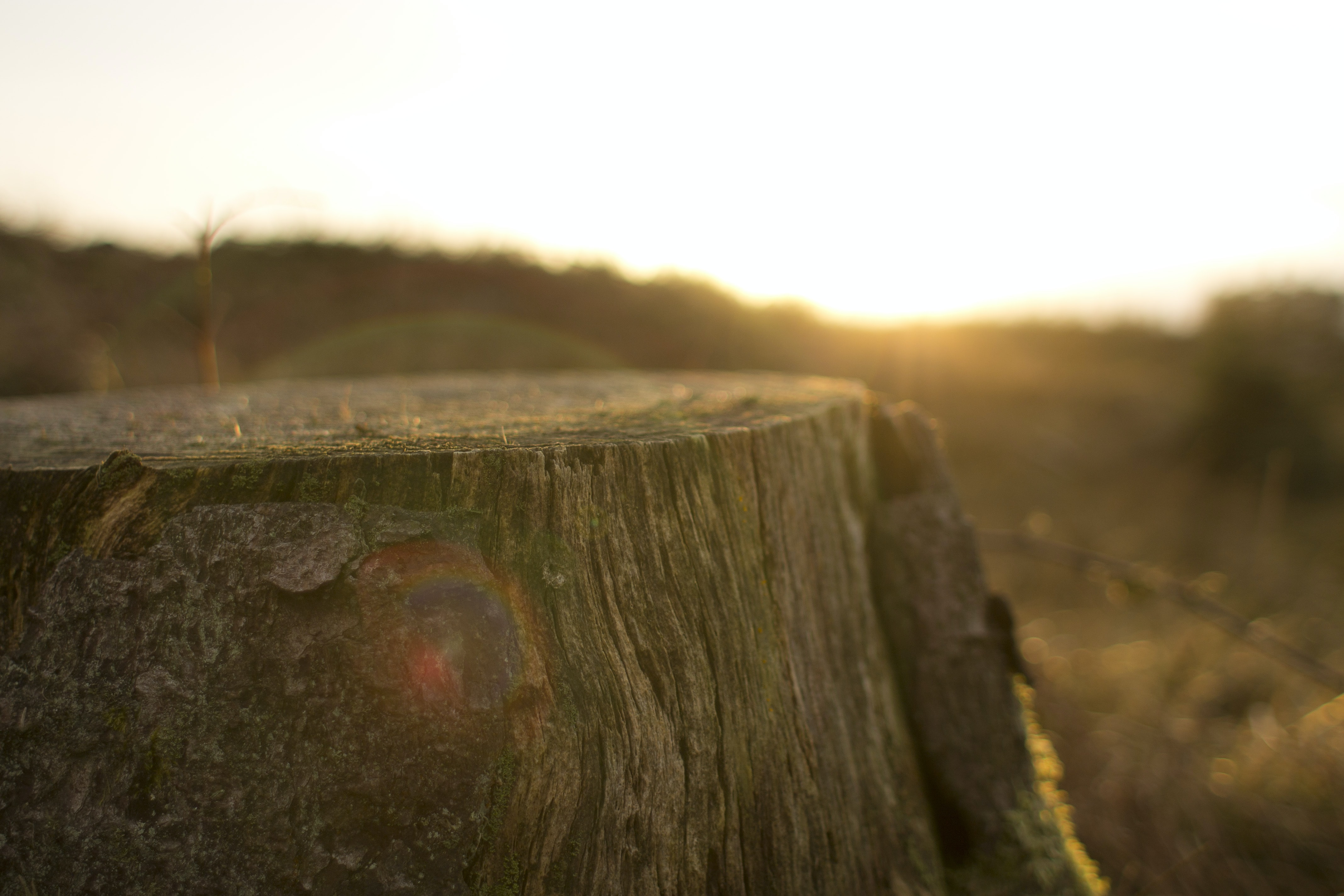 close up photography of tree trunk