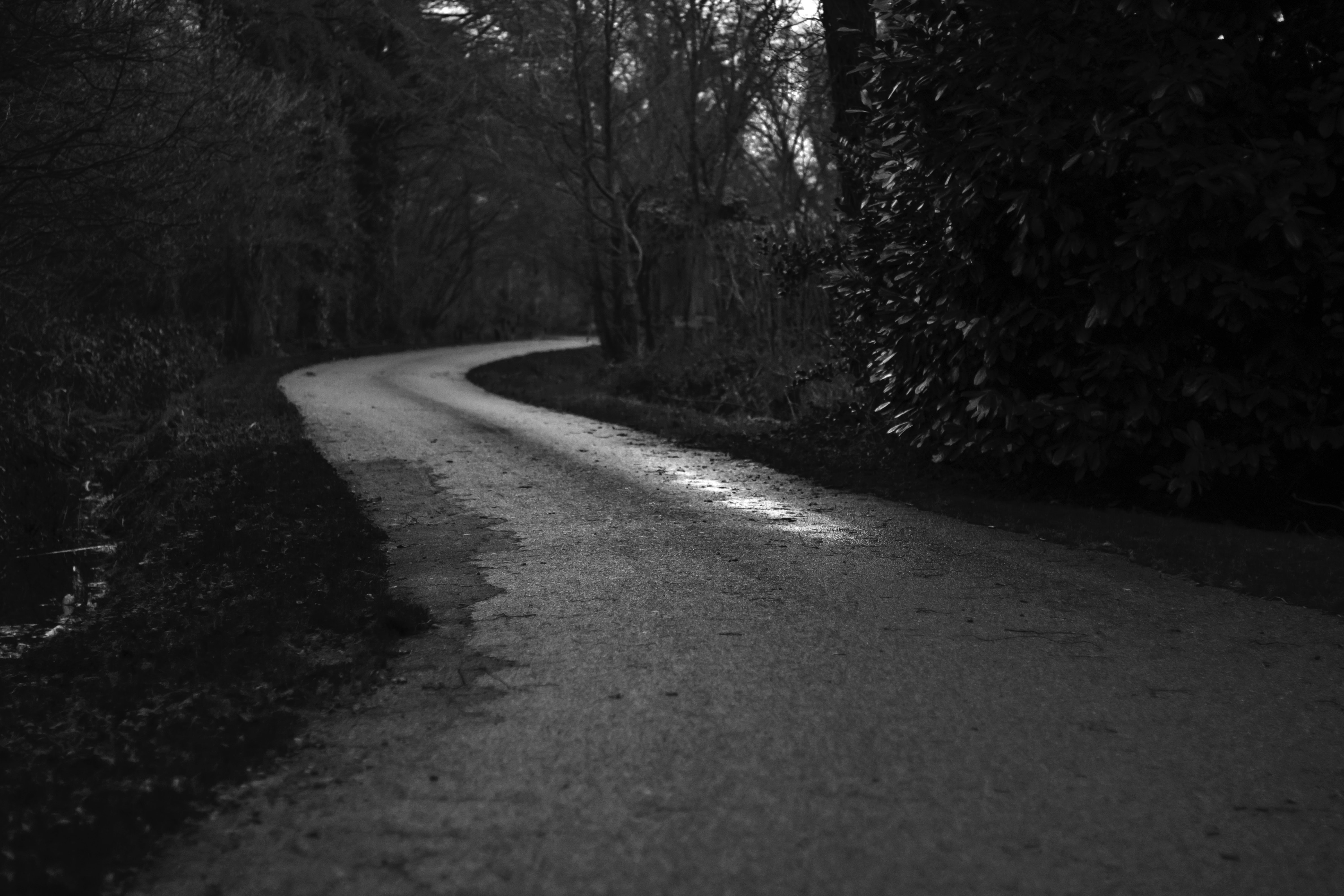 grayscale photo of road in between trees at daytime
