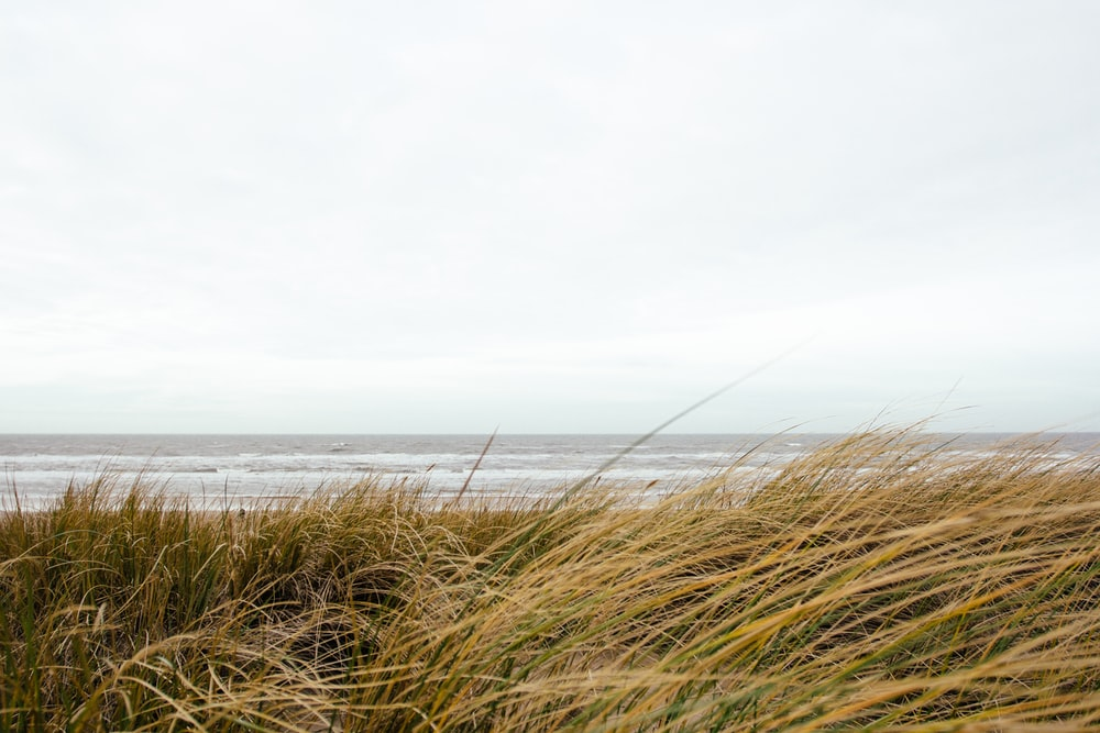 brown grass in front ocean at daytime