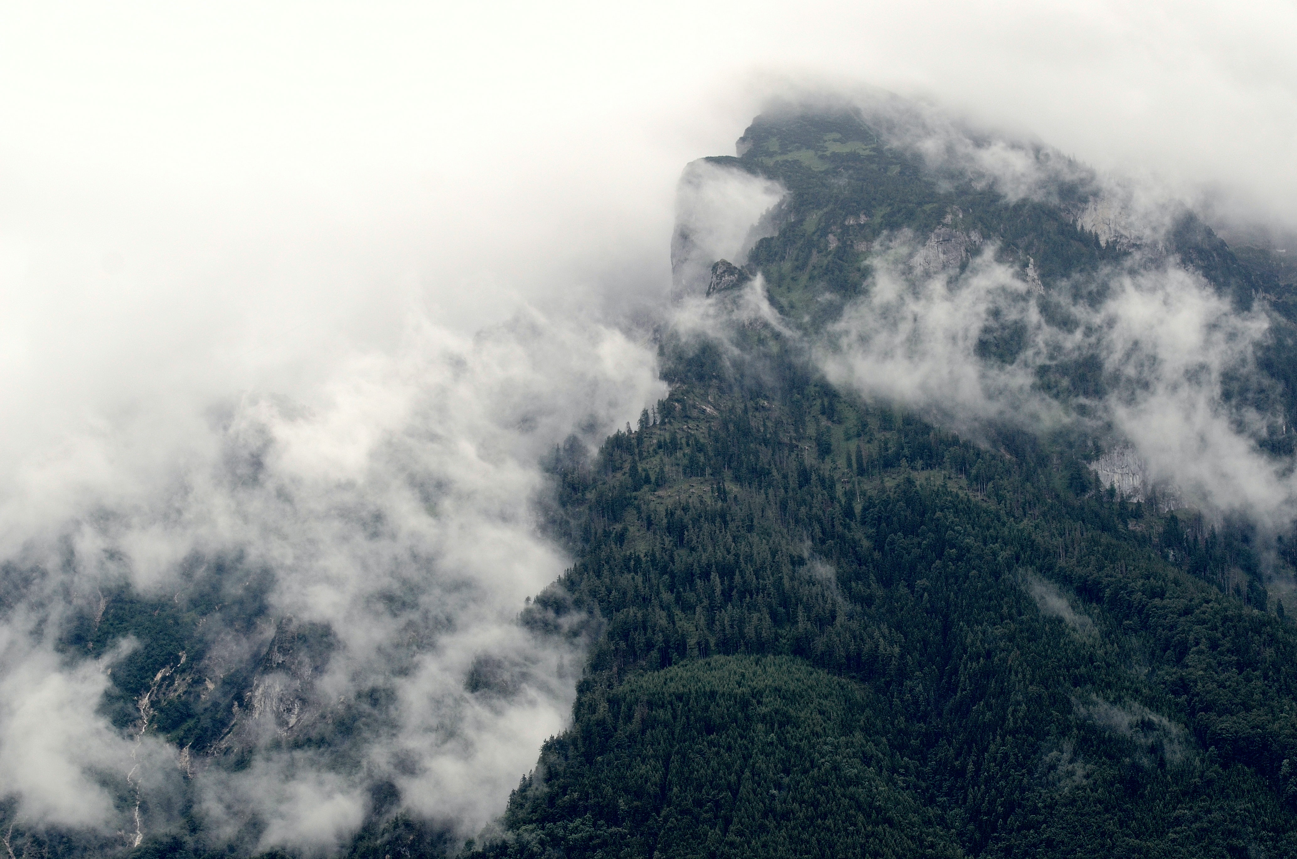 Mist rolling down the heavily wooded slopes of a steep mountain