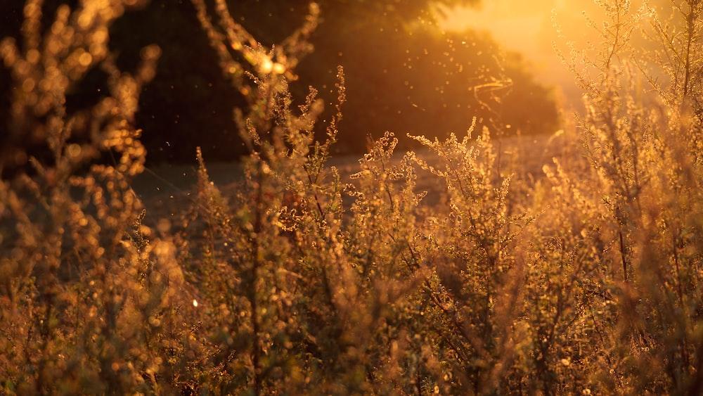 closeup photo of grasses near road