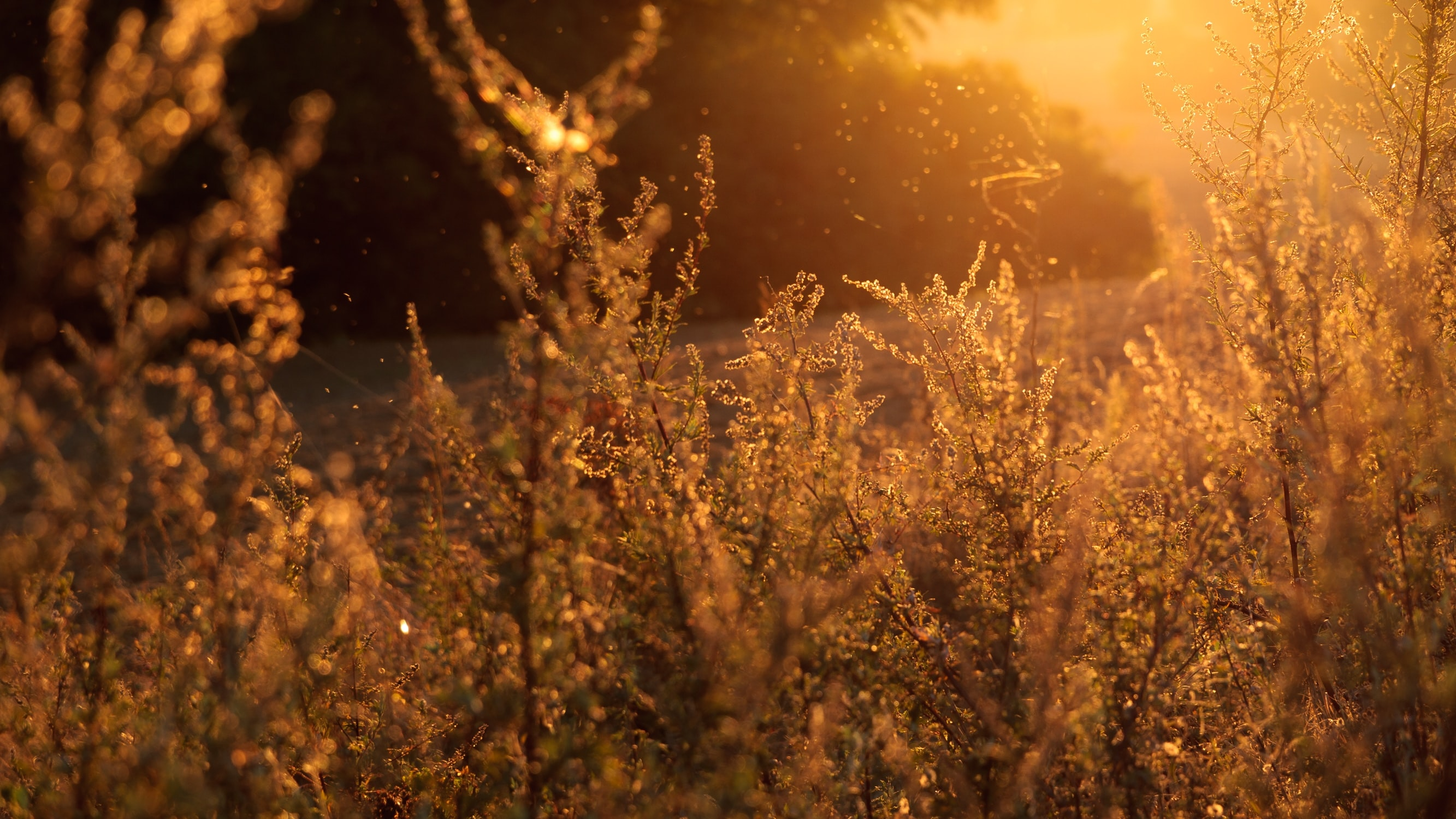 Flowering shrubs swaying in the wind under warm setting sun