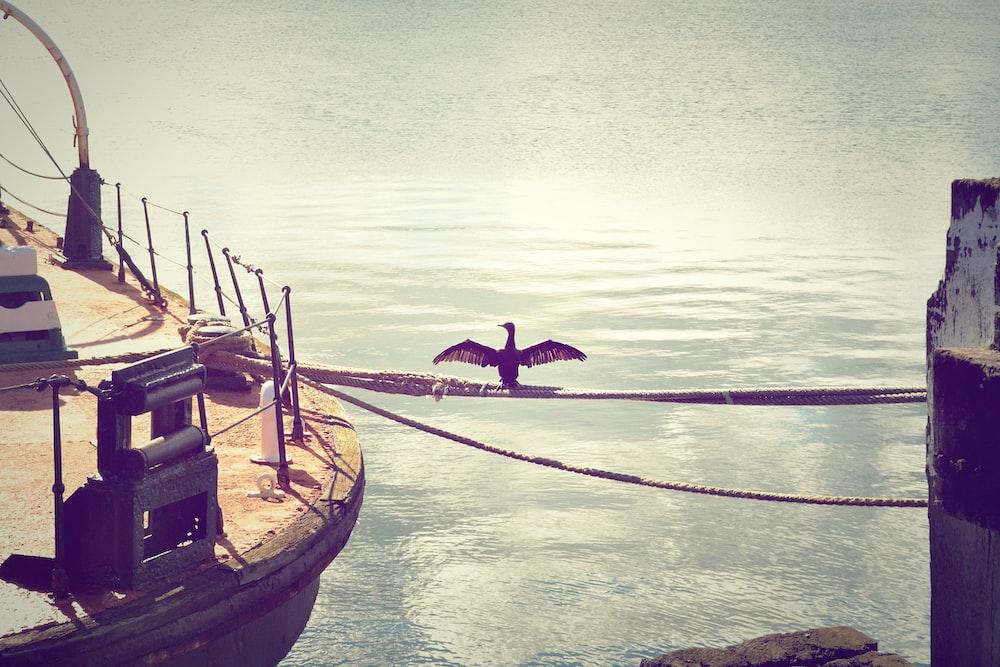 black bird perching on rope during daytime