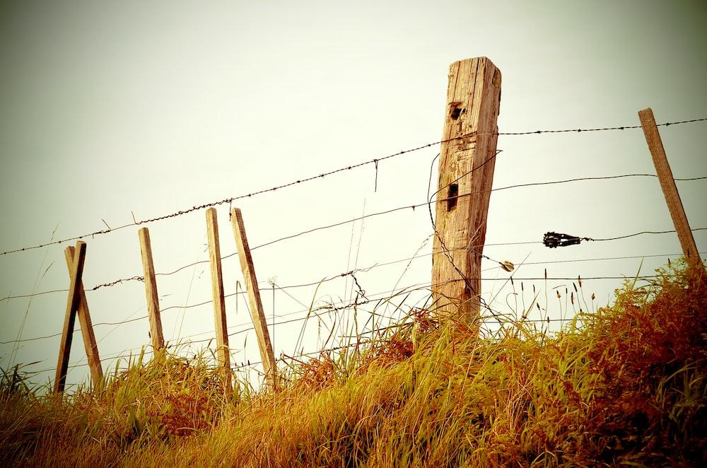 brown fence near green grass