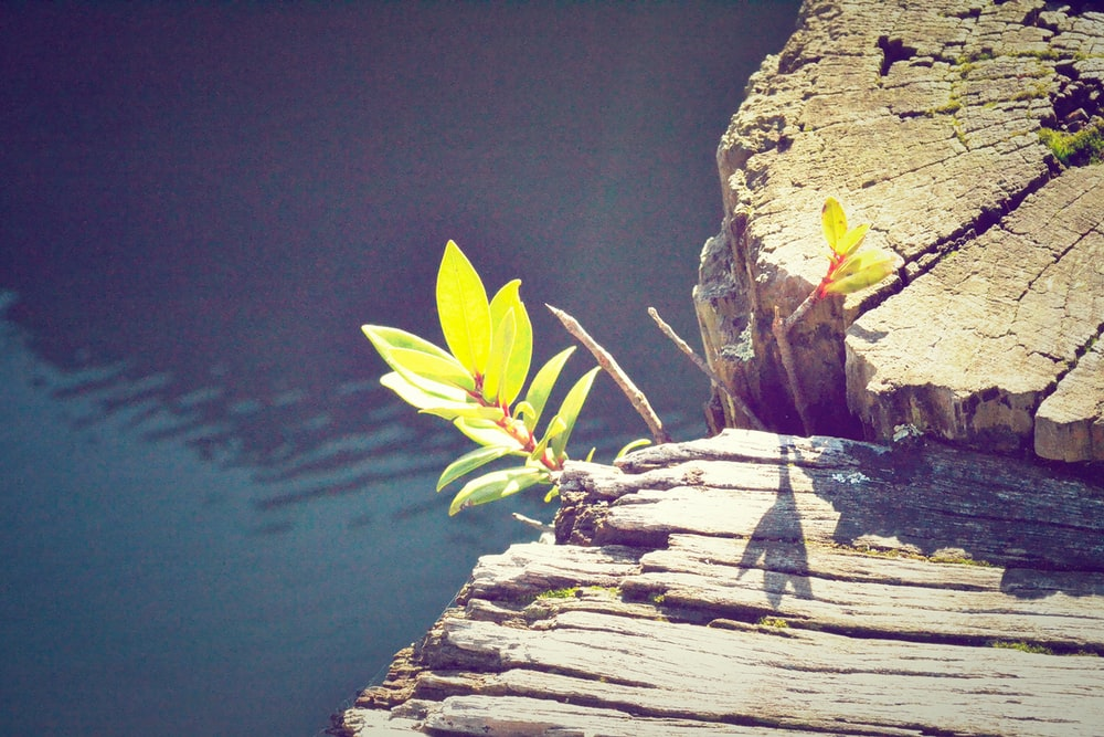 closeup photo of green orchid plant near brown log and bodies of water