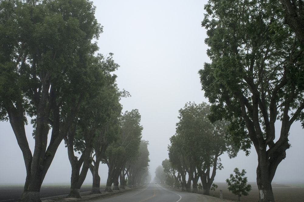 gray road surrounded by trees