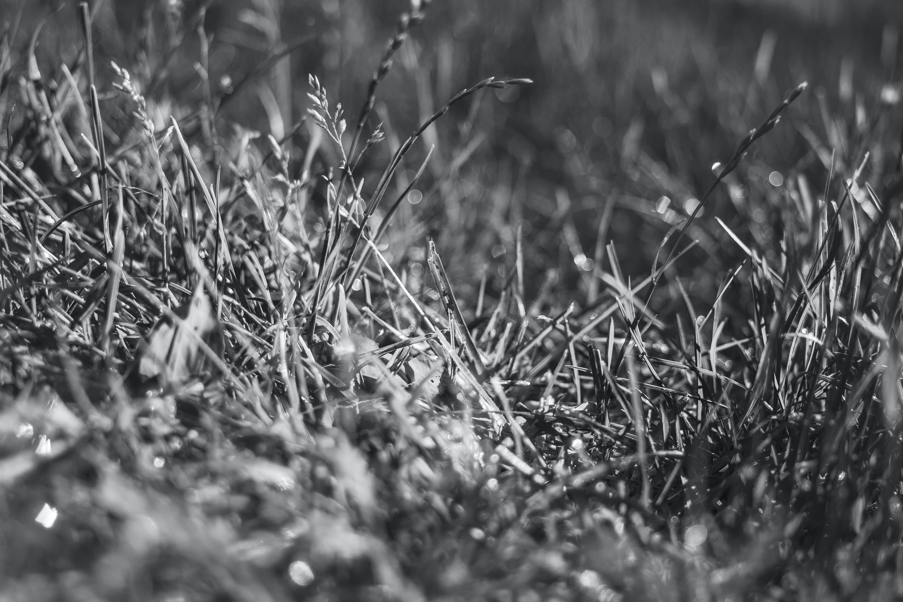 Black and white macro shot of grass in field