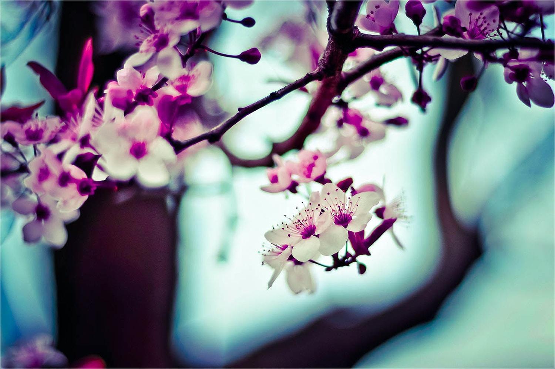 Rula sibai pink flowers.jpg?ixlib=rb 0.3