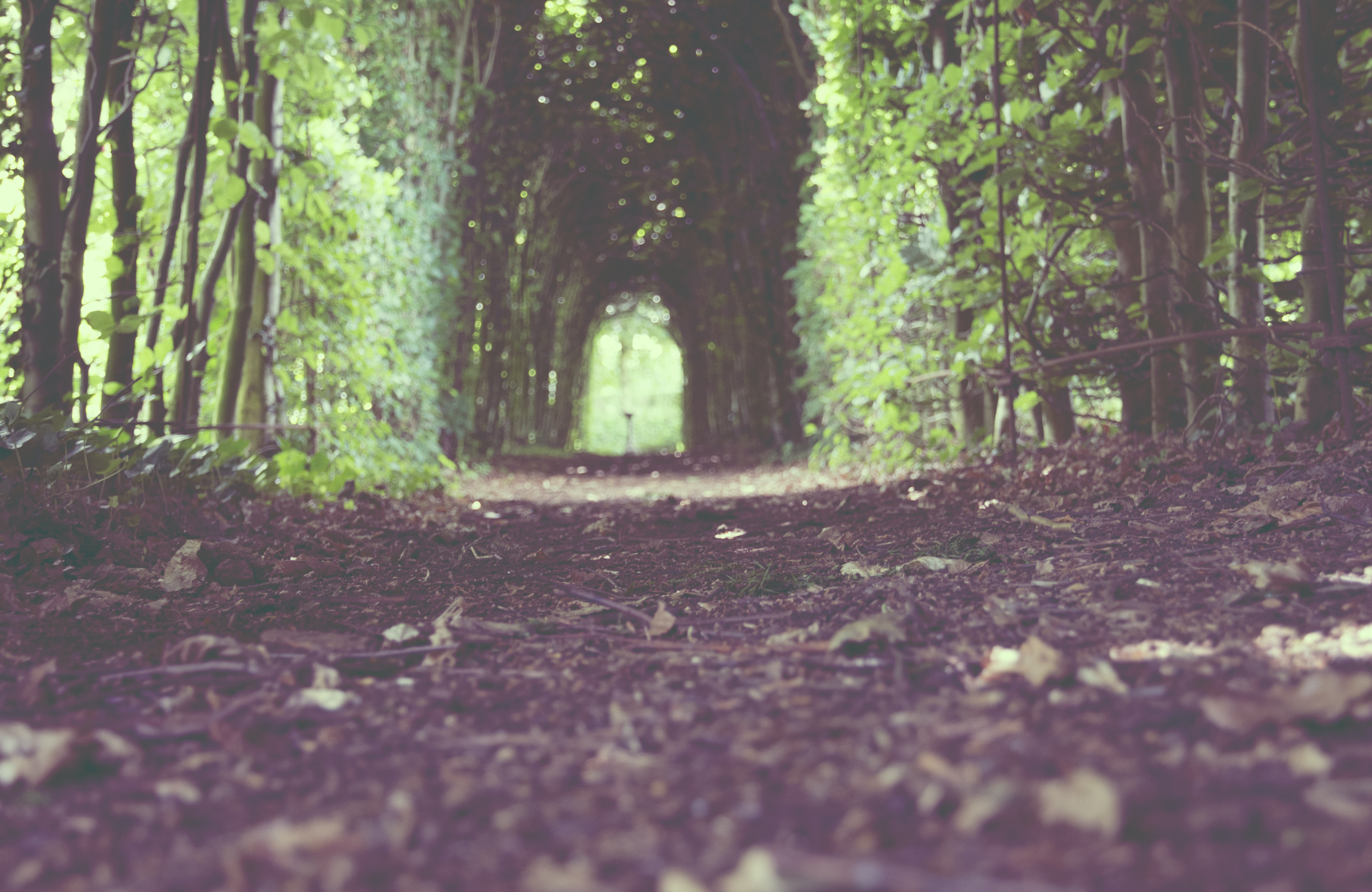 A low shot of a trail leading through a green tree arch