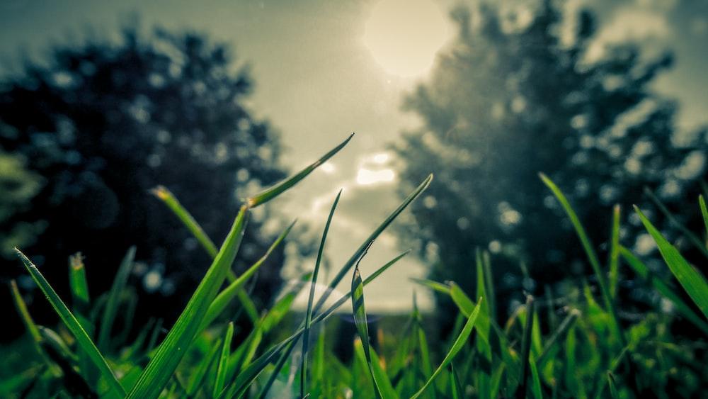 shadow field of field photography of grass field \