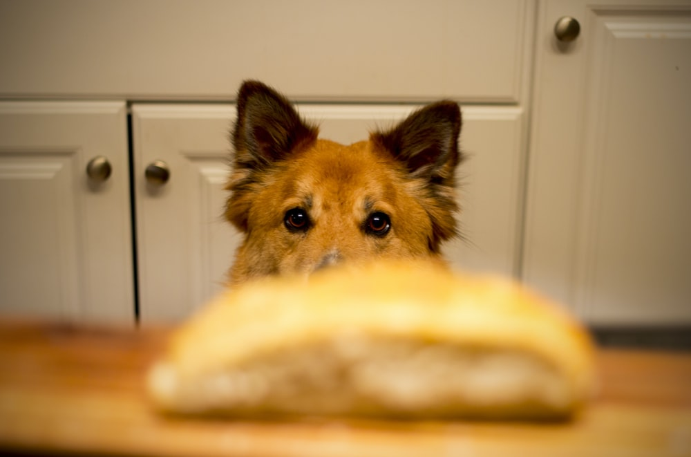 bread on wooden surface in front of dog