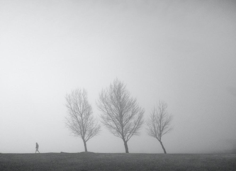 bare tree on gray field
