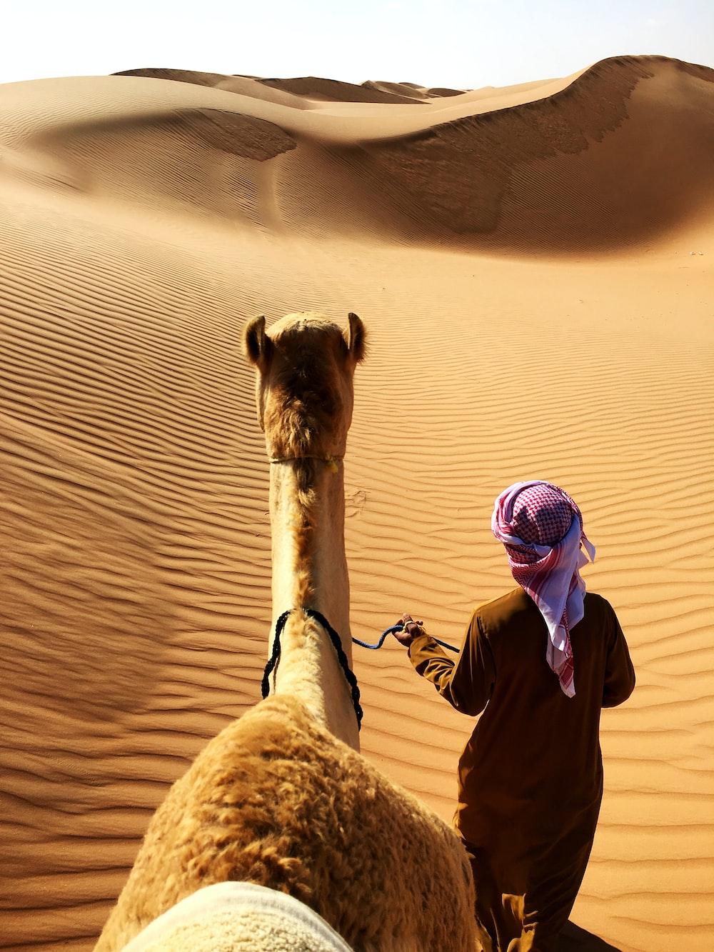 person walking beside camel