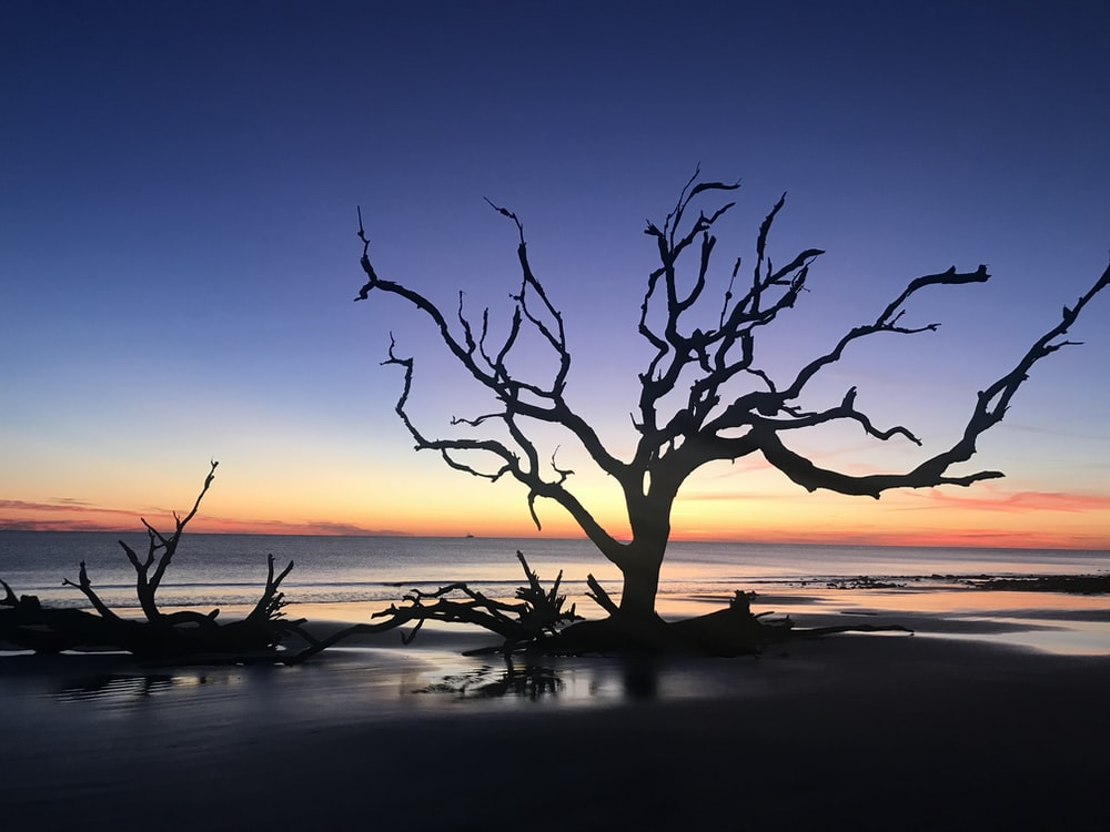 leafless tree by the sea