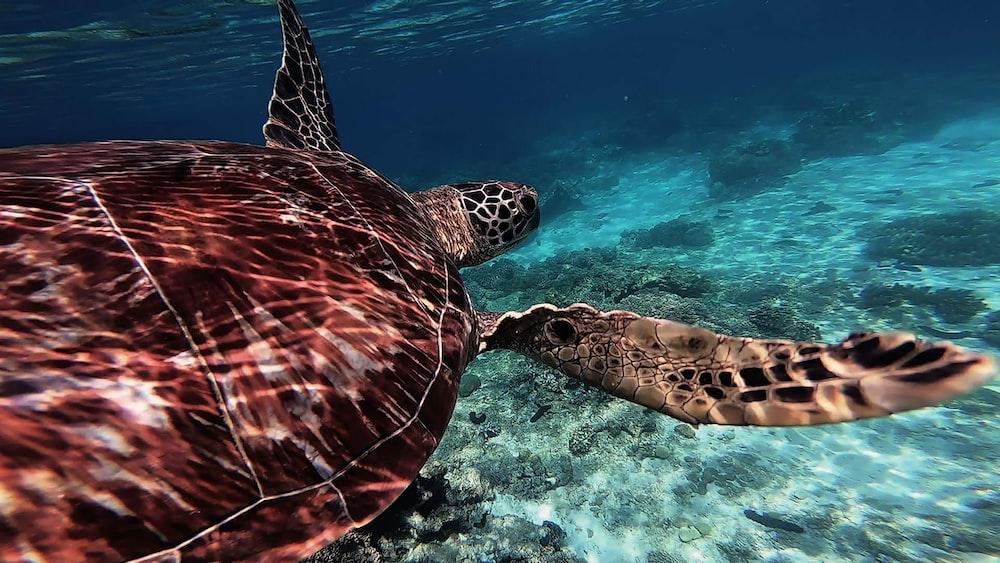 sea turtle underwater photography
