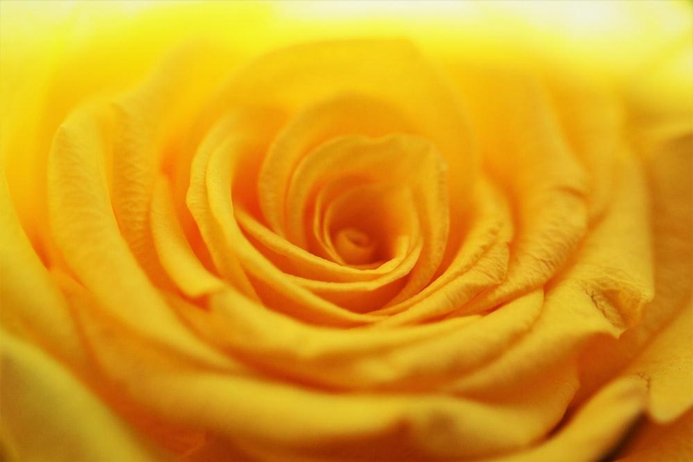 yellow flower in macro photography