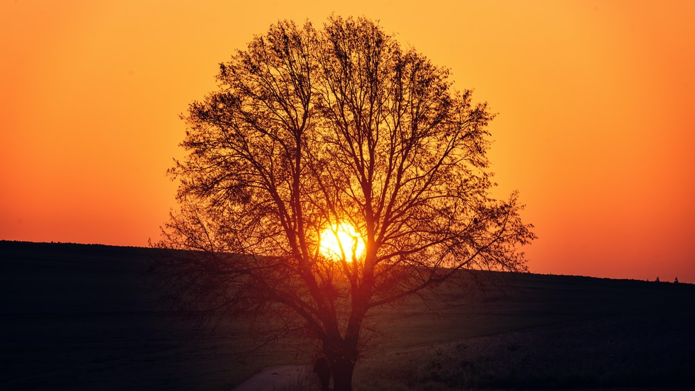 tree under clear sky during sunset