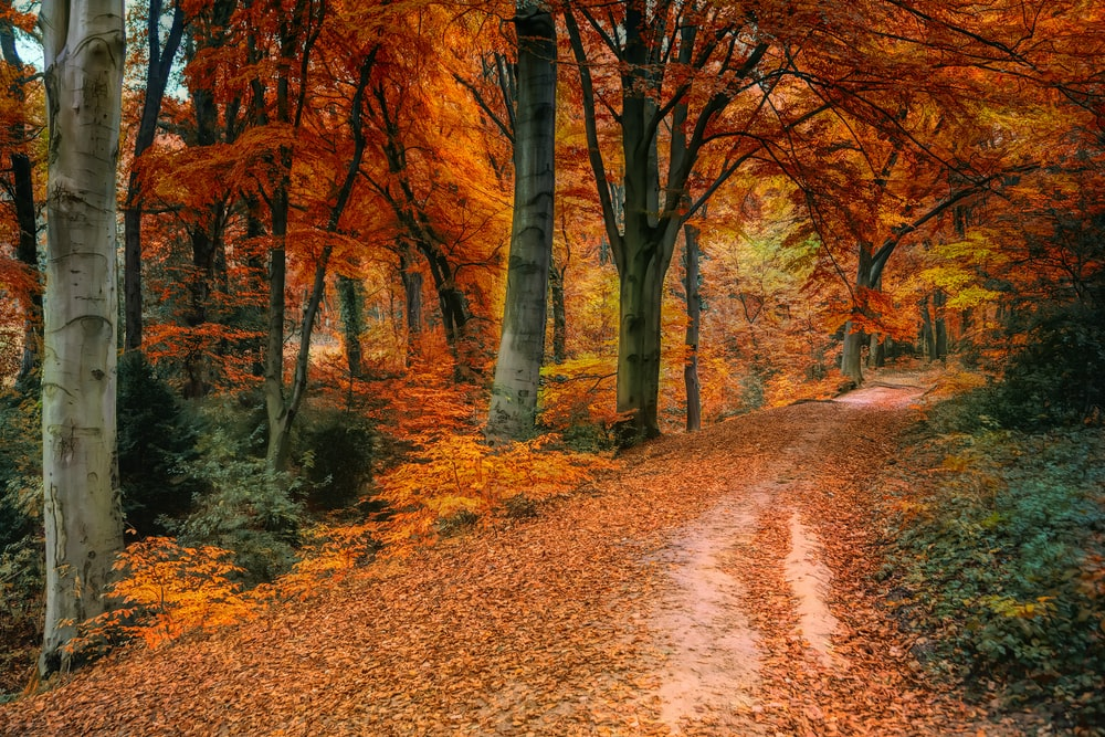 brown and orange trees