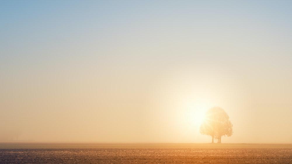 tree under sunray