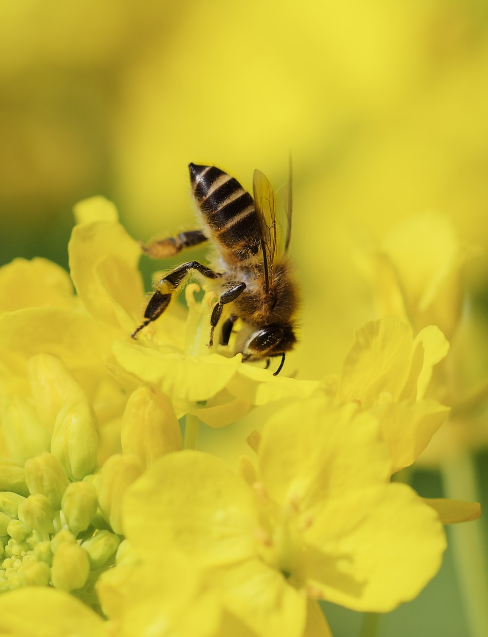 close-up photography of bee on yellow flower