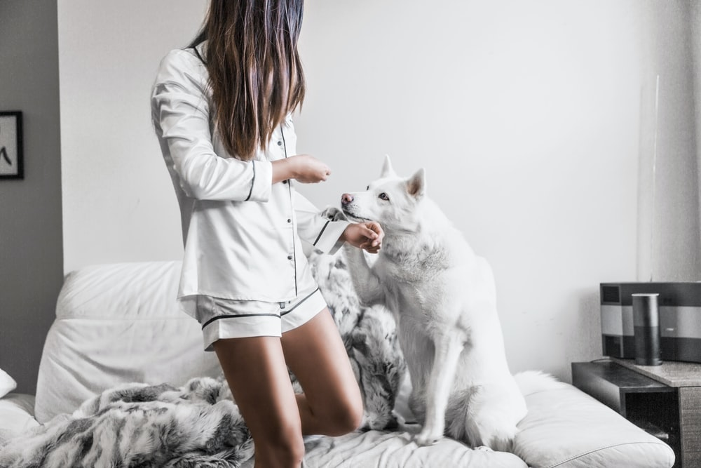 woman standing beside white dog sitting on sofa
