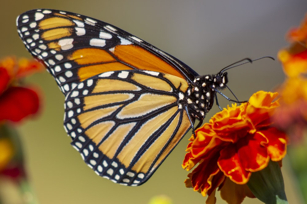 selective focus photography of butterfly on flower