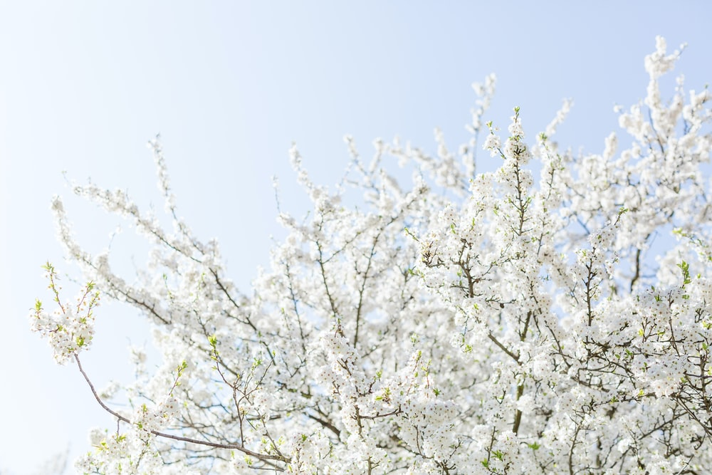 white and brown tree under clear blue sky