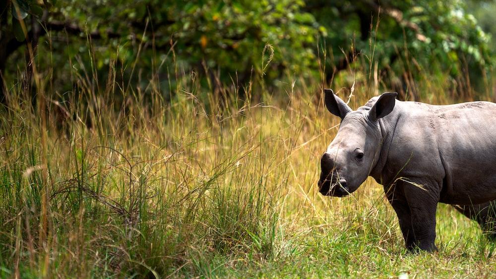 black animal near grass