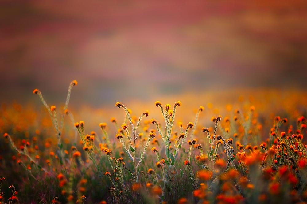 orange flower during daytime