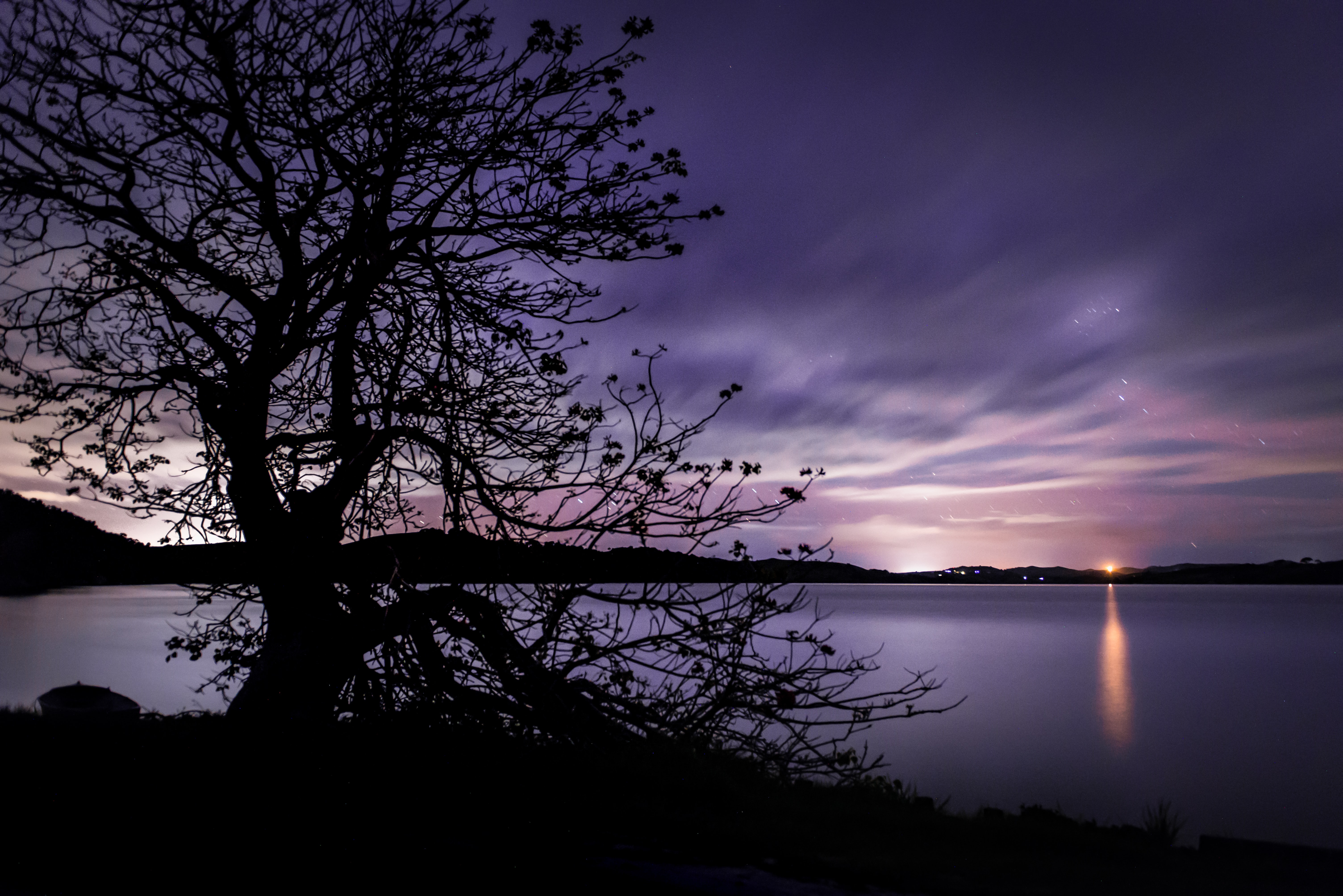 silhouette of bare tree near body of water