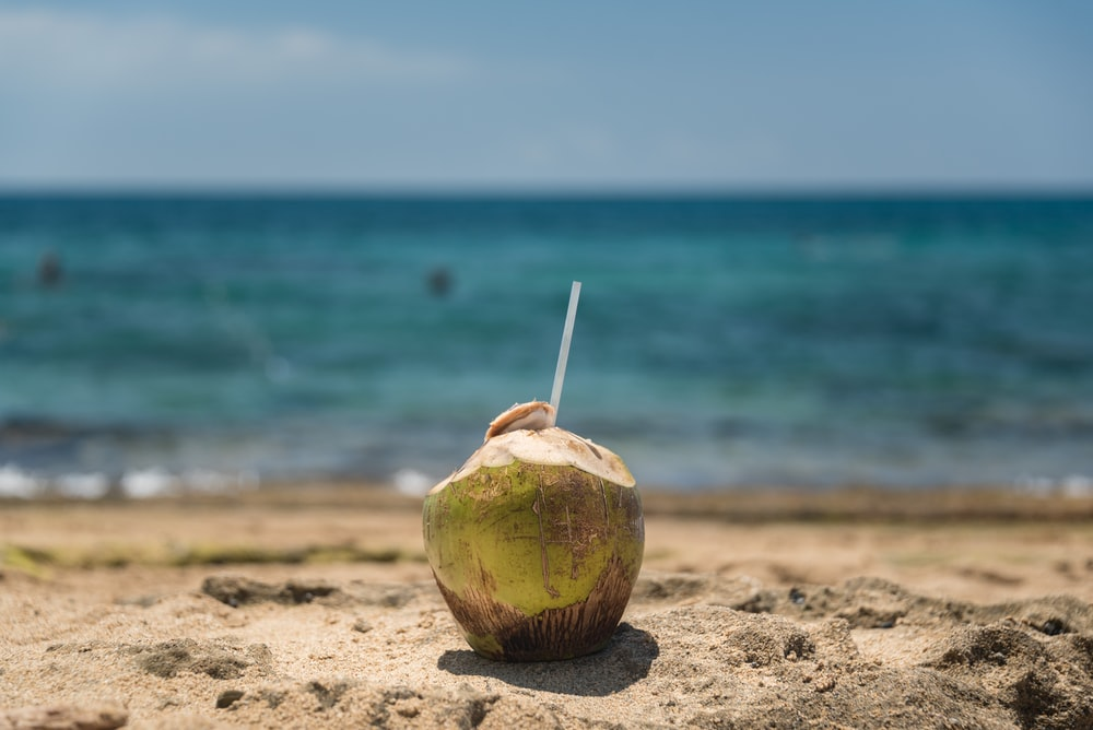 coconut beside body of water during daytime