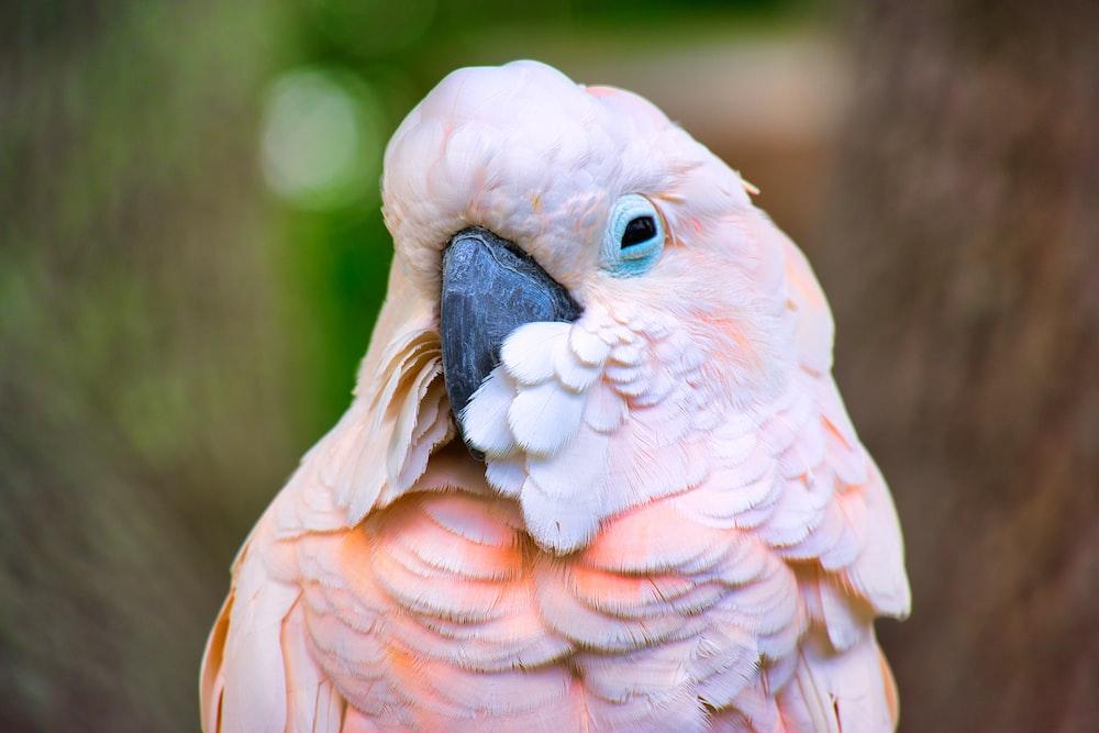small beaked bird close up photography