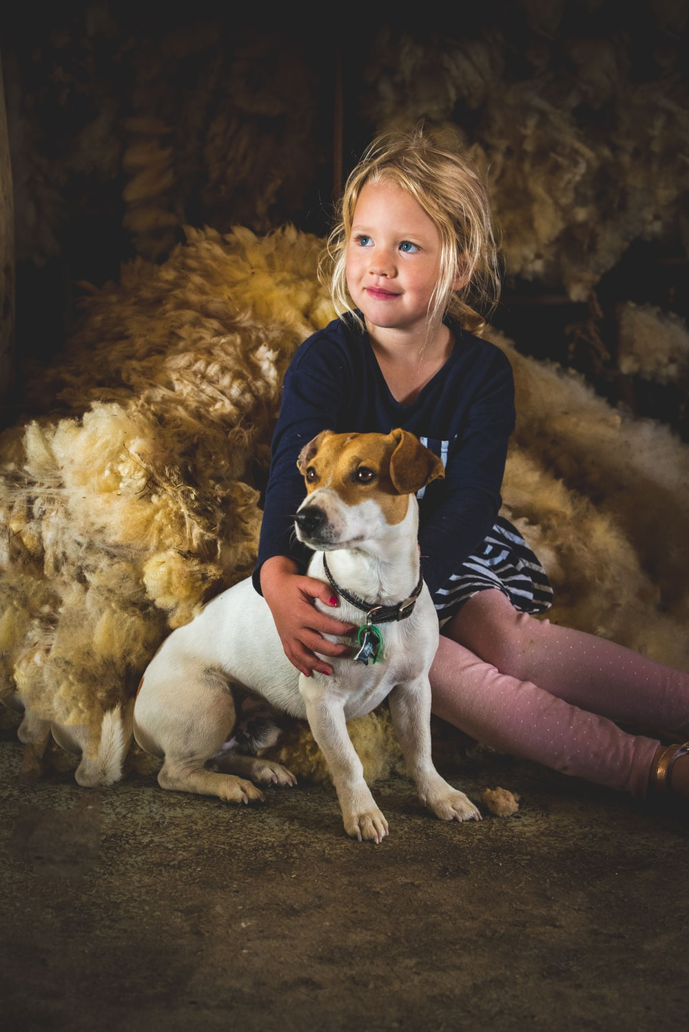 girl in blue long-sleeved shirt holding brown and white Jack Russel terrier