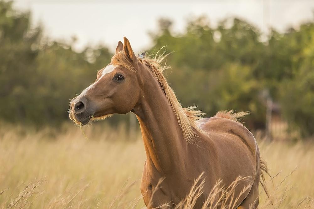 brown horse standing near grass