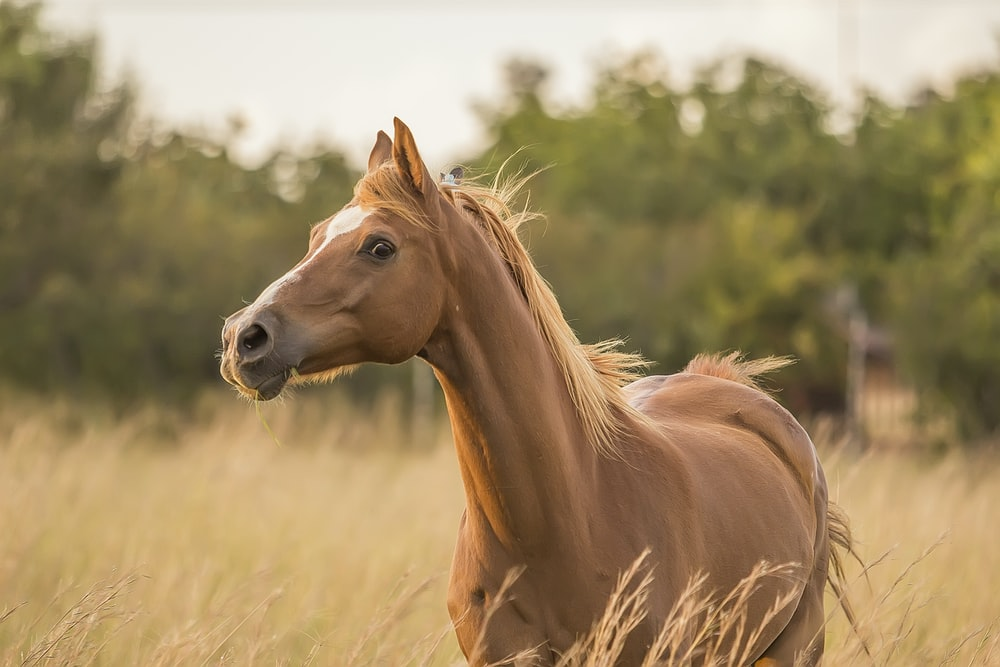brown horse standing near grass