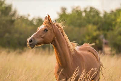 brown horse standing near grass horse zoom background