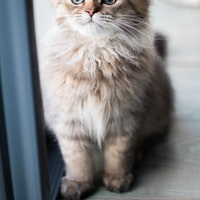 https://source.unsplash.com/200x200/daily?cute+animals