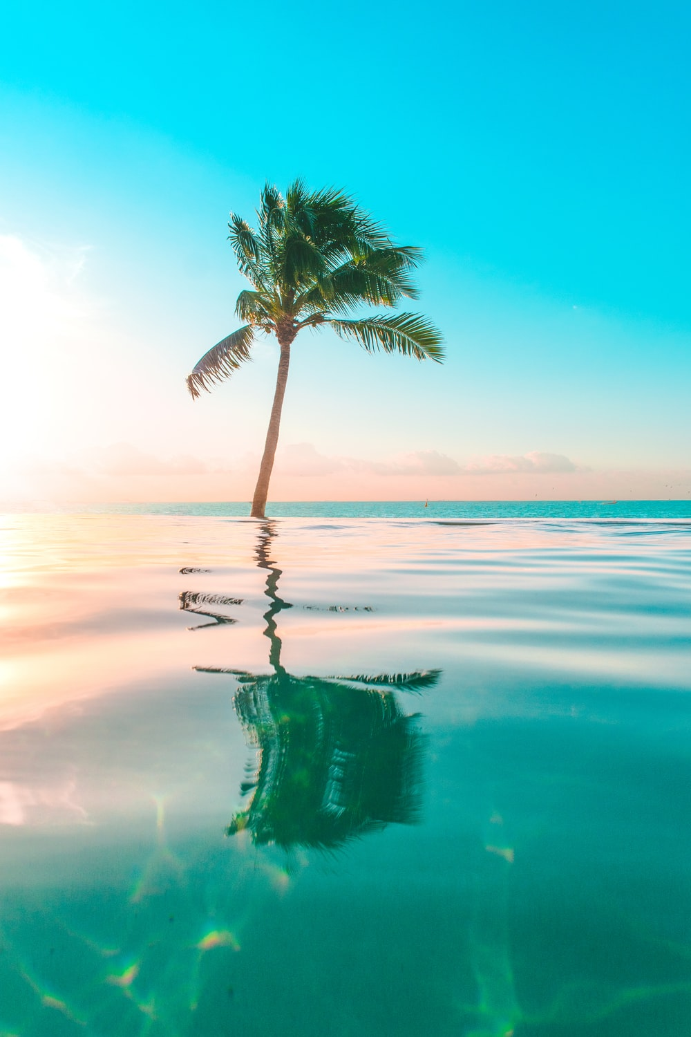 infinity pool in front coconut tree
