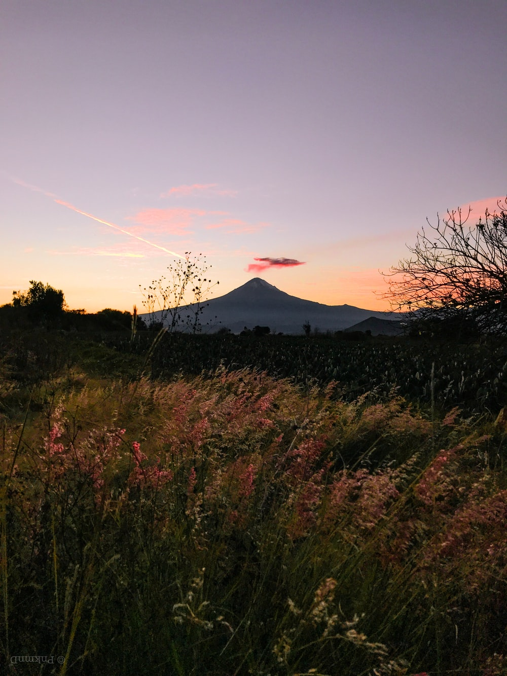 pink flowers facing volcano